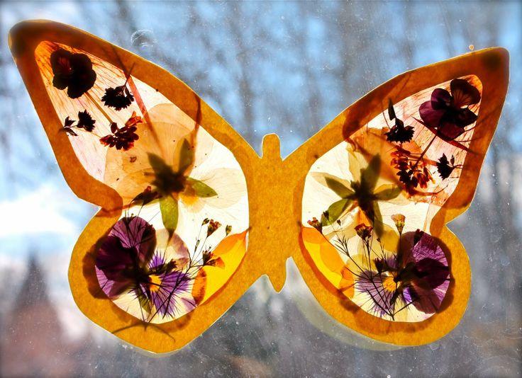 fluturi si flori presate